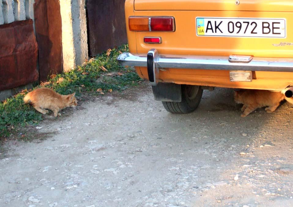 2013_1110юбилей-Крым-ноябрь0106 мини
