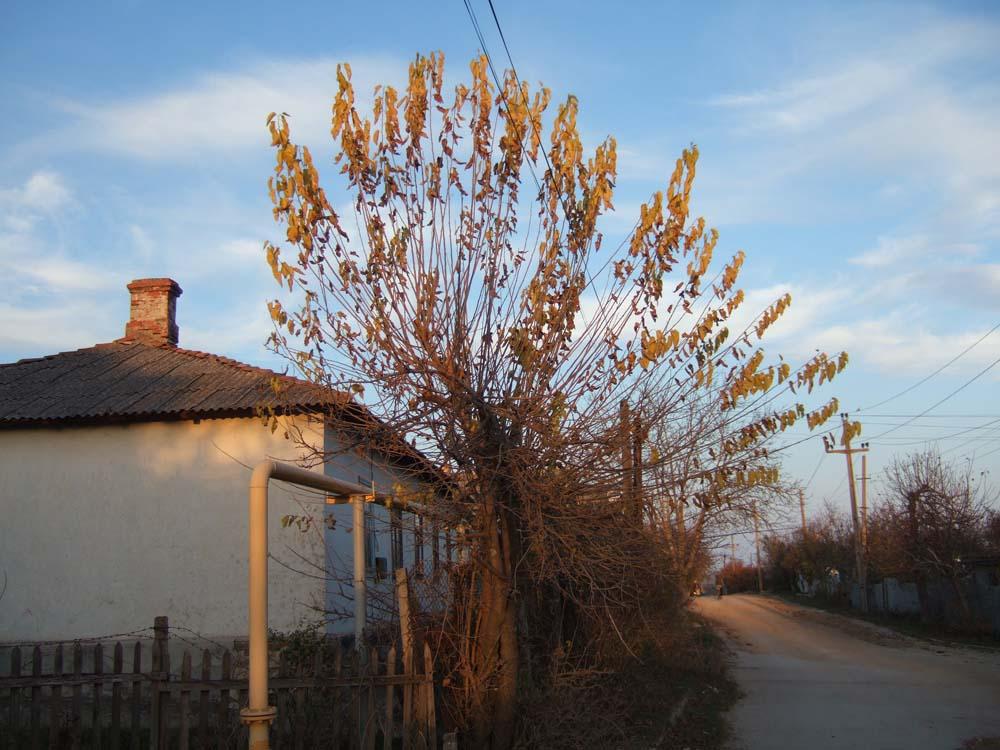 2013_1110юбилей-Крым-ноябрь0115 мини