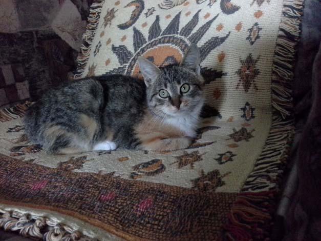20141116_110034 кошка