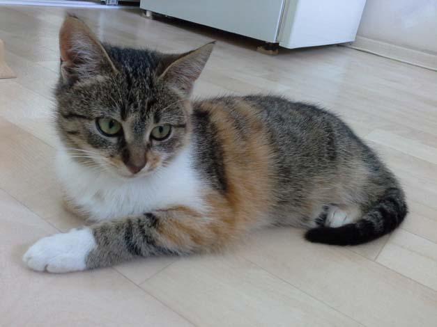 кошка мини 1