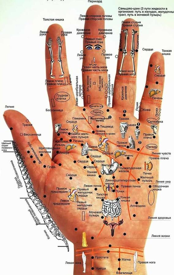 Как по рукам определять болезни