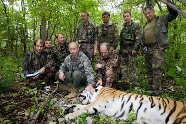 тигр2
