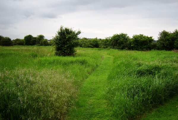 path over the field