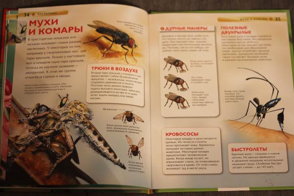 мухи-и-комары-энц