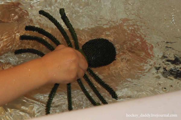 плавает-ли-паук
