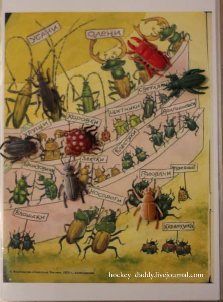 жукамо-жуки