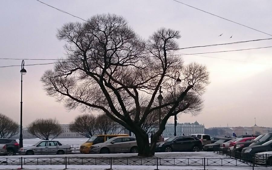 Дерево у Невы