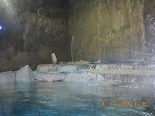 а вот и пингвин!