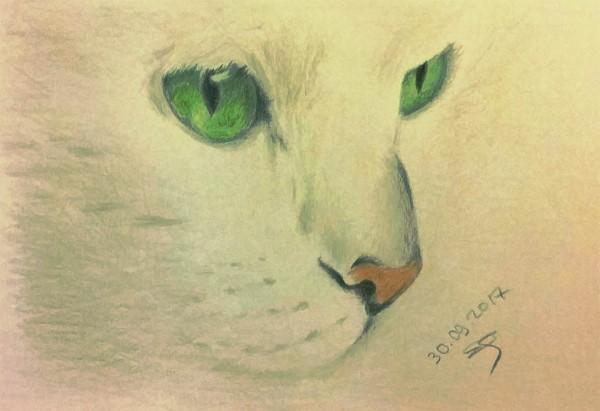 кот белый зеленоглазый