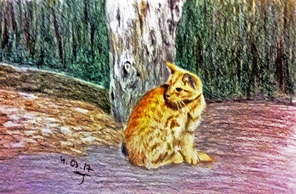 кот мартовский рыжий