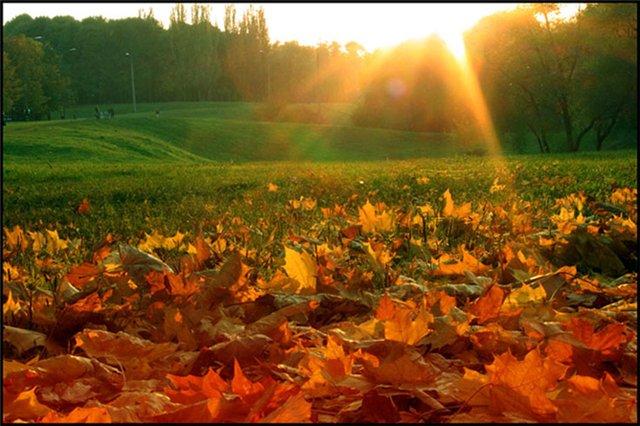 Золотой сентябрь
