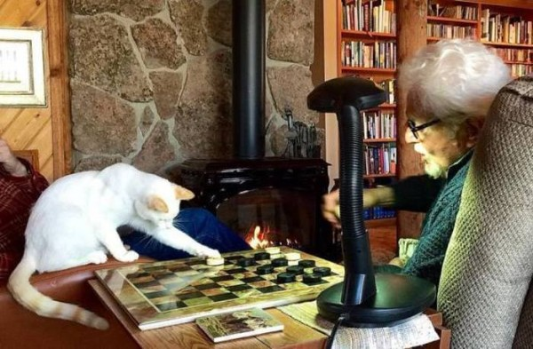Партия в шашки