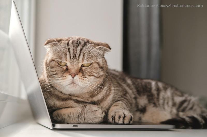 Grumpy-Cat-Katze-auf-Notebook-im-Homeoffice
