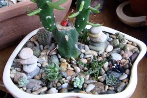 Кактусы и листовые суккуленты