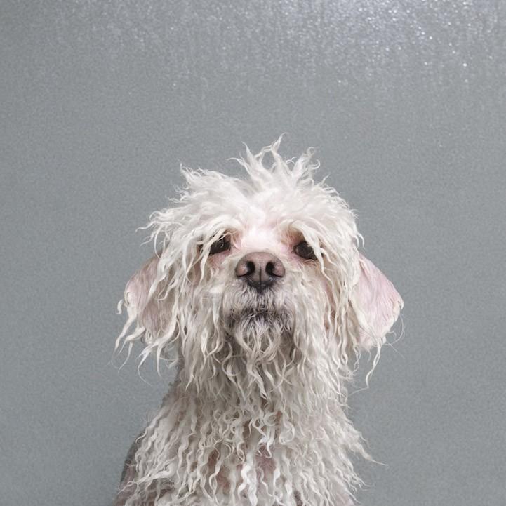 мокрый щенок картинки этого создается