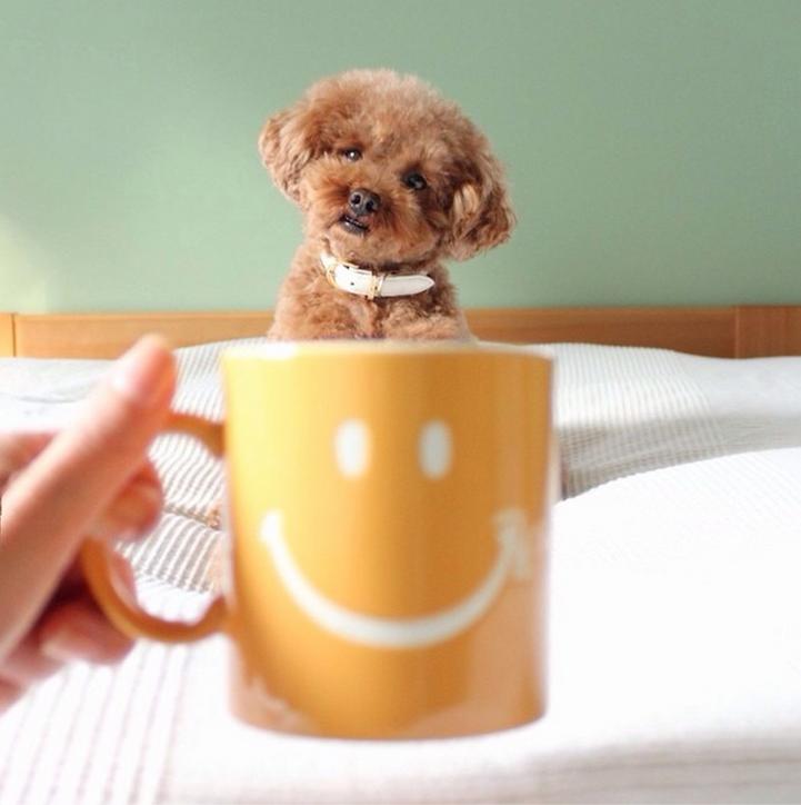 Картинки с собаками доброе утро, маленький прикольная картинка