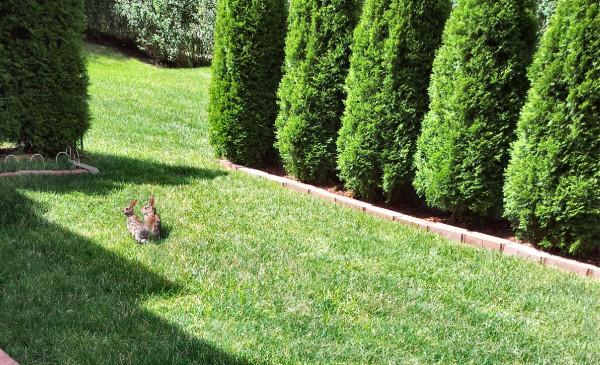 Rabbits2013