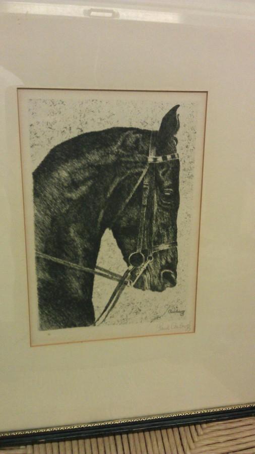 Casberg horse