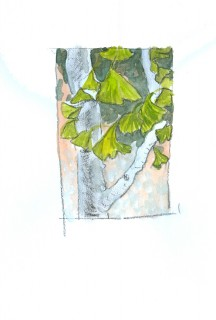 Ginko tree sketch by Honoria Starbuck 2009