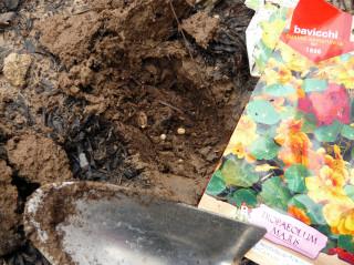 Planting nasturtium seeds on Feb 5, 2010