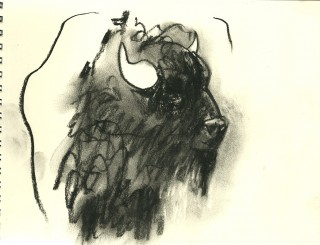 charcoal drawing of buffalo for Save the Yellowstone Wild Buffalo campaign by Honoria Starbuck July 2010