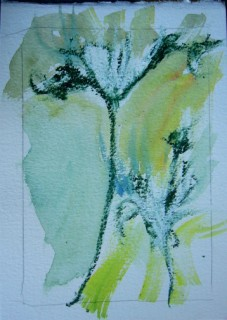 watercolor shadow of queen anne's lace