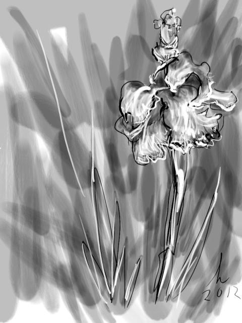 Zilker Park Iris Garden Zen Brush iPad Drawing 16 JA 12 Honoria Starbuck