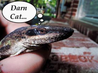 lizard thinking of cat