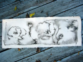 ink drawing of flowers
