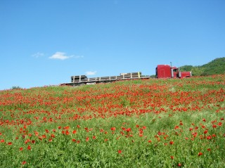 blue sky red truck field of poppies