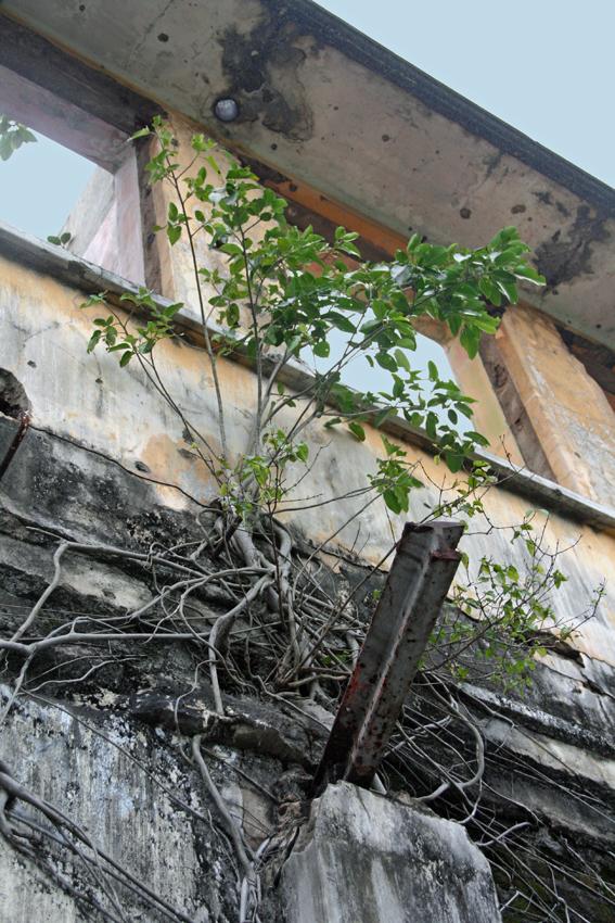 дерево в здании мал
