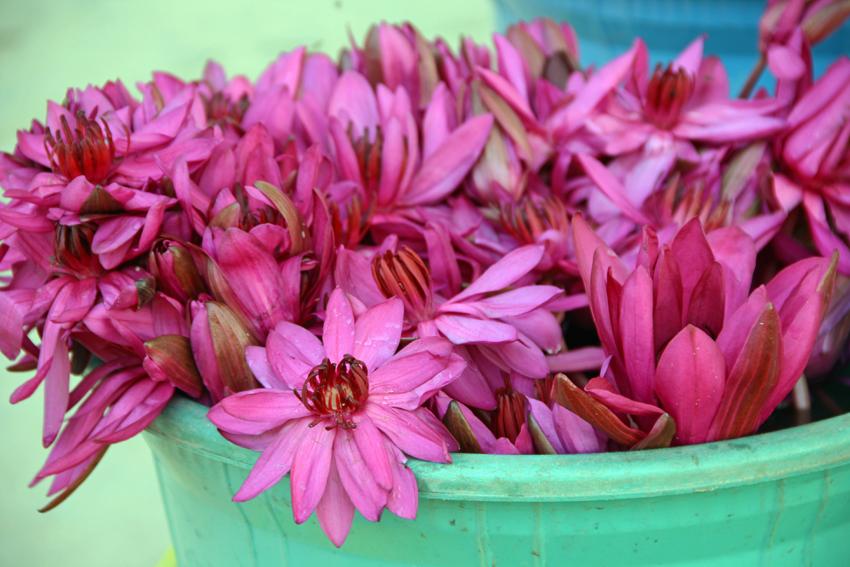цветы мал