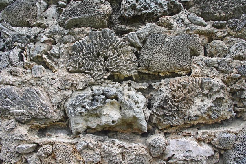 коралловая стена остров Делфт мал