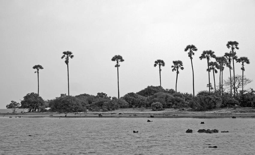 пальмы на мысу остров Делфт мал