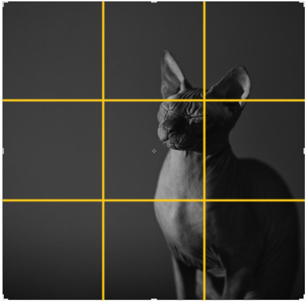 Как сделать фото по золотому сечению