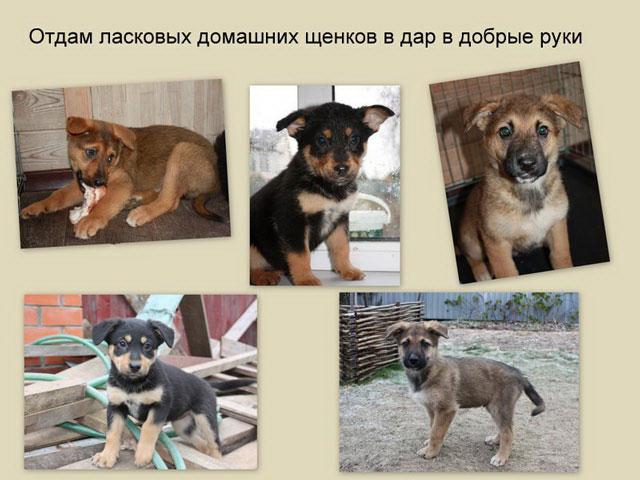 1 Пять щенков