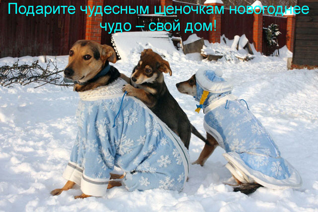 1 Три щенка