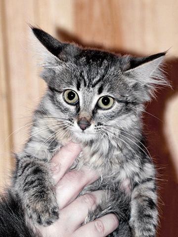 Пять котят 1