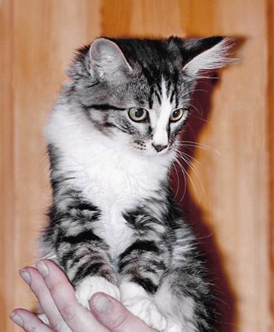 Пять котят 2