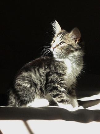 Пять котят 6