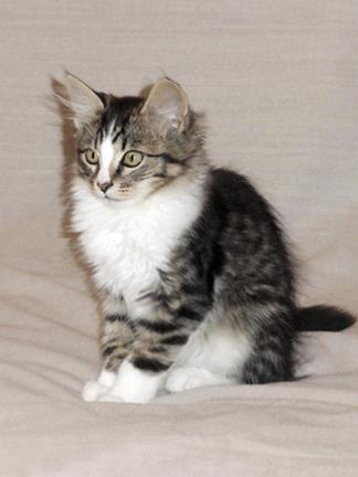 Пять котят 7