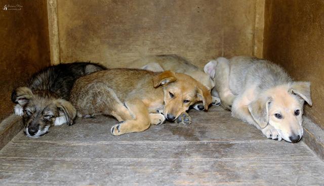 Пять щенков 5