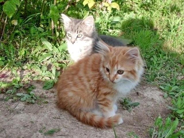 1 Котята