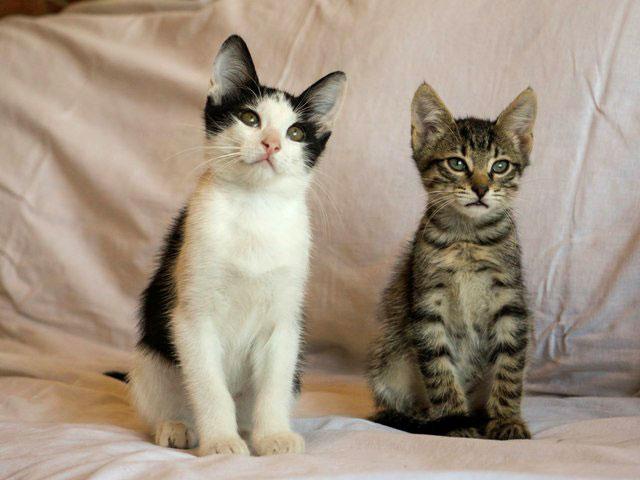 1 Два котенка