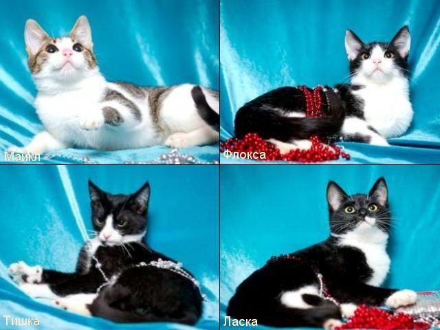 1 Четыре котенка