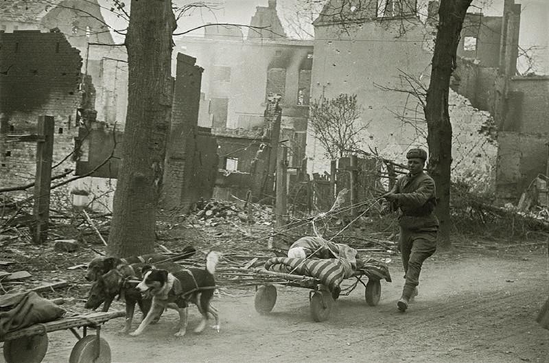 Эвакуация раненого, 1945 г.