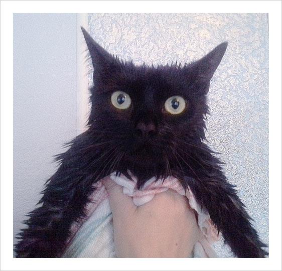cat-_wash