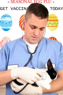 A veterinarian holding a rabbit and listening to it with a stethoscope.  Behind him is a poster for vaccinations for 'Seasonal Egg Flu'.