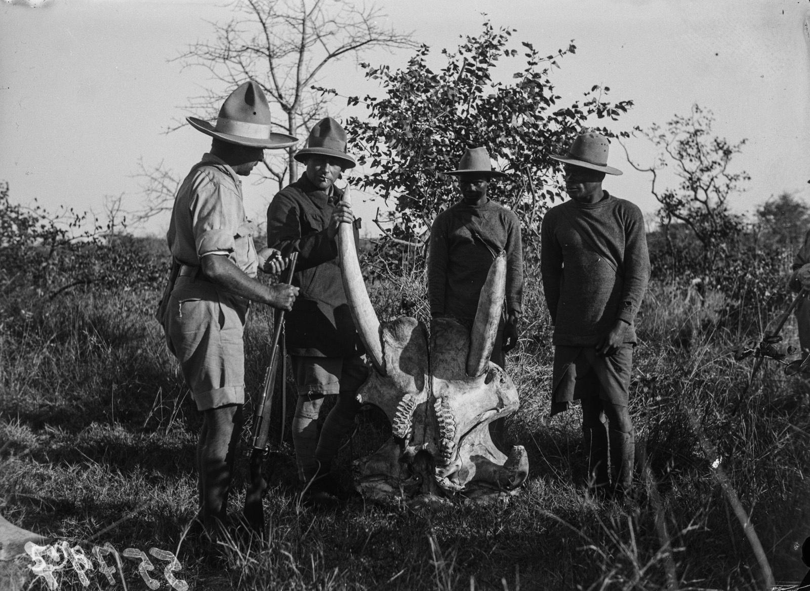 Национальный парк Крюгера. Четверо мужчин вокруг черепа слона