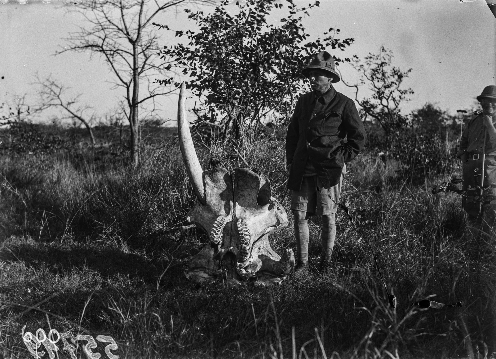 Национальный парк Крюгера. Участник экспедиции рядом с черепом слона. Они бивень уже удален
